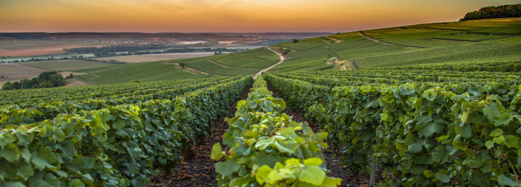 New Hotels in France's Wine Regions a Draw For Visitors