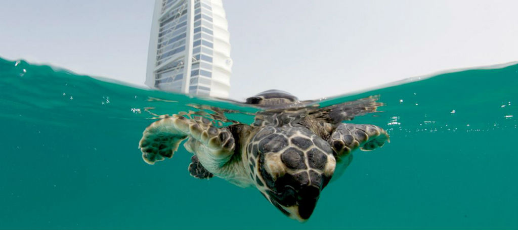 How turtles are being rehabilitated in one of the world's finest hotels [Video]