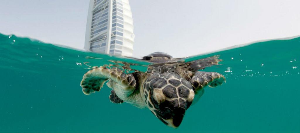 Cómo están rehabilitando a las tortugas en uno de los mejores hoteles del mundo [video]