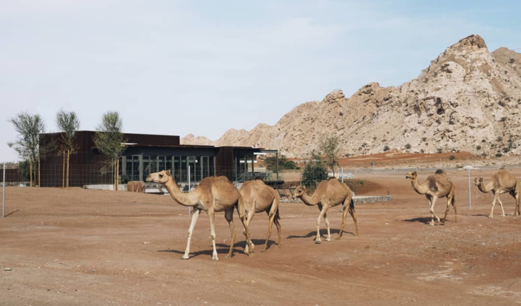 ANARCHITECT give abandoned convenience store a second life as luxury desert hotel