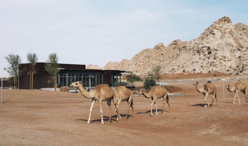 ANARCHITECT le da a una despensa abandonada una segunda vida como hotel de lujo en el desierto
