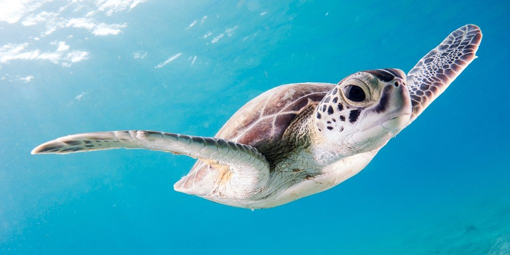 Luxury hotel in Maldives looks to hire turtle-tending intern
