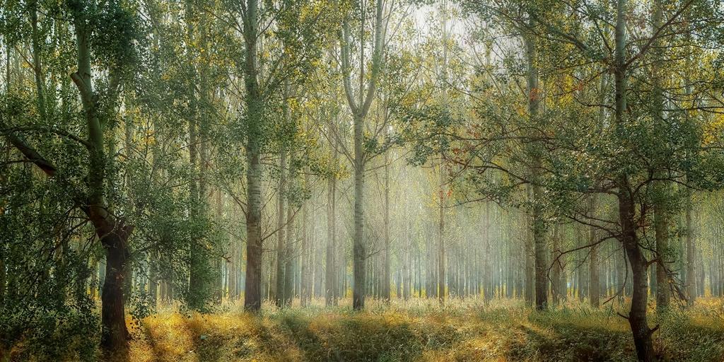 Accor planta 100.000 árboles en el RU [informe de construcción]