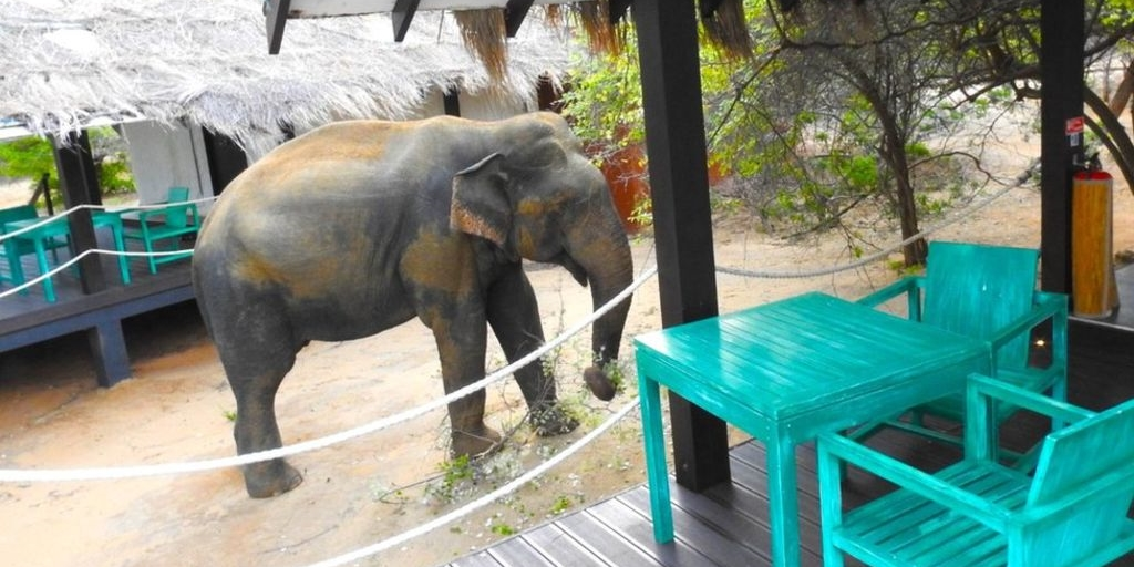 Sri Lanka's Jetwing Yala Hotel counts elephant as VIP guest